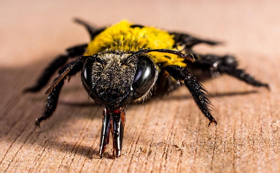 Disinfestazioni scarafaggi