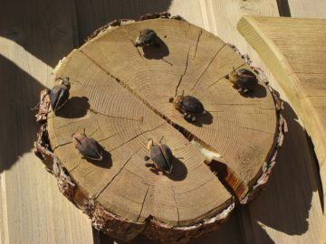 L'efficacia dell'insetticida per scarafaggi