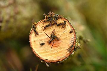 Disinfestazione delle vespe