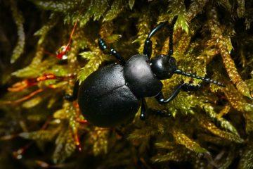 Il costo della disinfestazione degli scarafaggi
