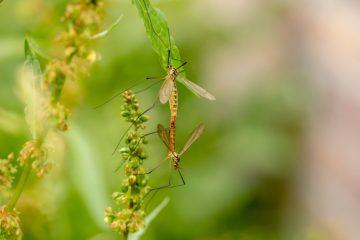 Eliminare zanzare in giardino si può!
