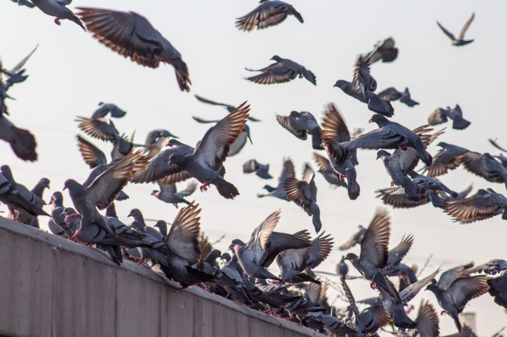 Rete anti piccioni