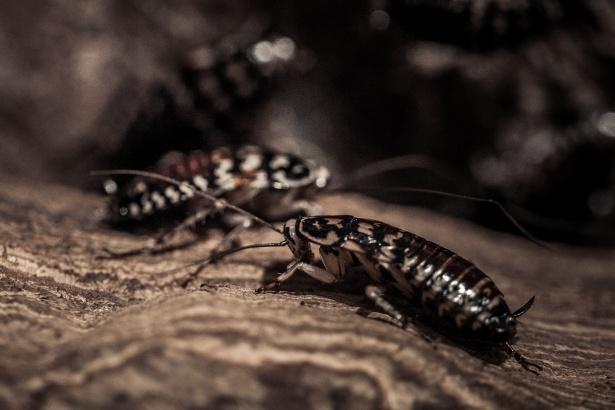 Prodotti contro gli scarafaggi