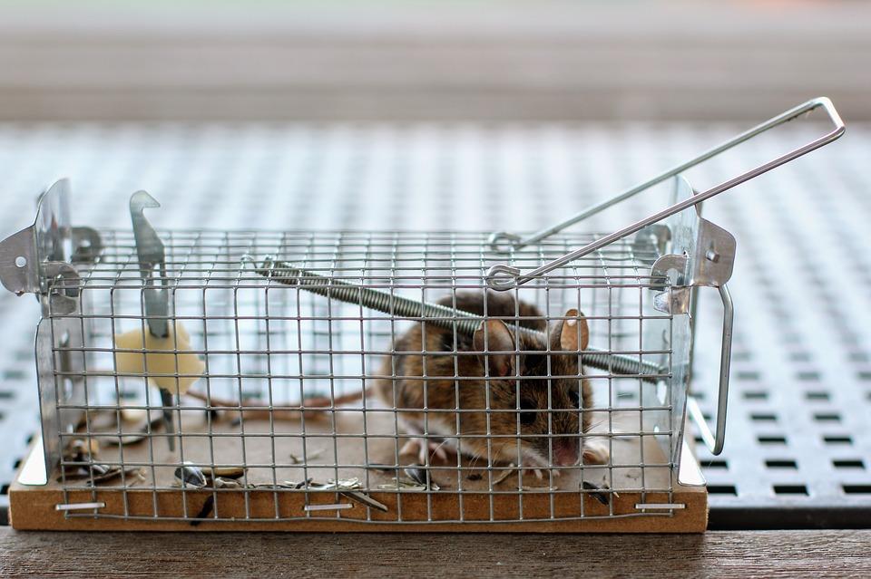 Vendita di trappole per topi