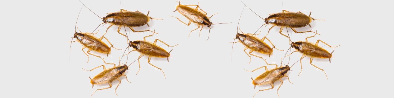 scarafaggi in cucina
