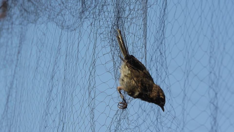 Rete anti-uccelli