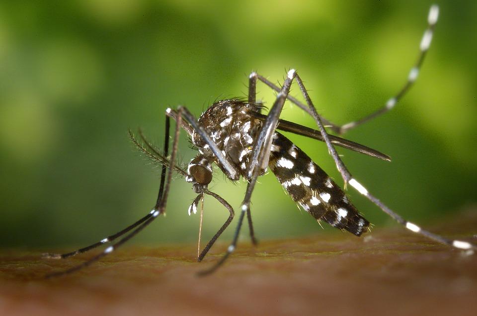 Come eliminare le zanzare tigre