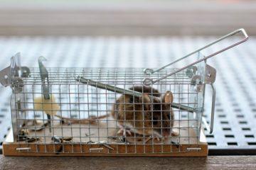 Vendita di trappole per topi, ecco alcuni riferimenti utili