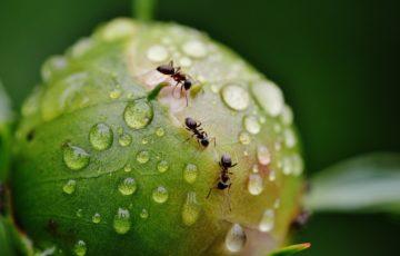 Come uccidere le formiche ed evitare il ripresentarsi del problema