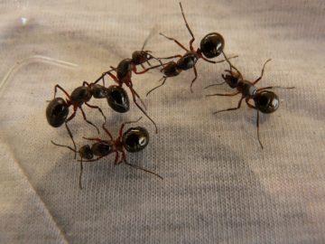 Prodotti contro le formiche e come combattere questo tipo di infestazione