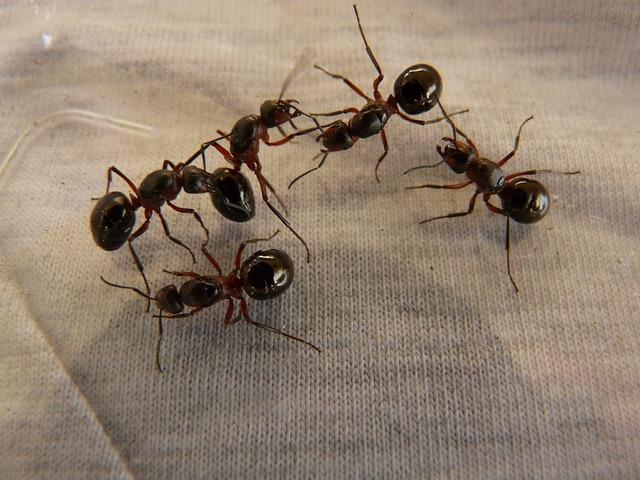prodotti contro le formiche