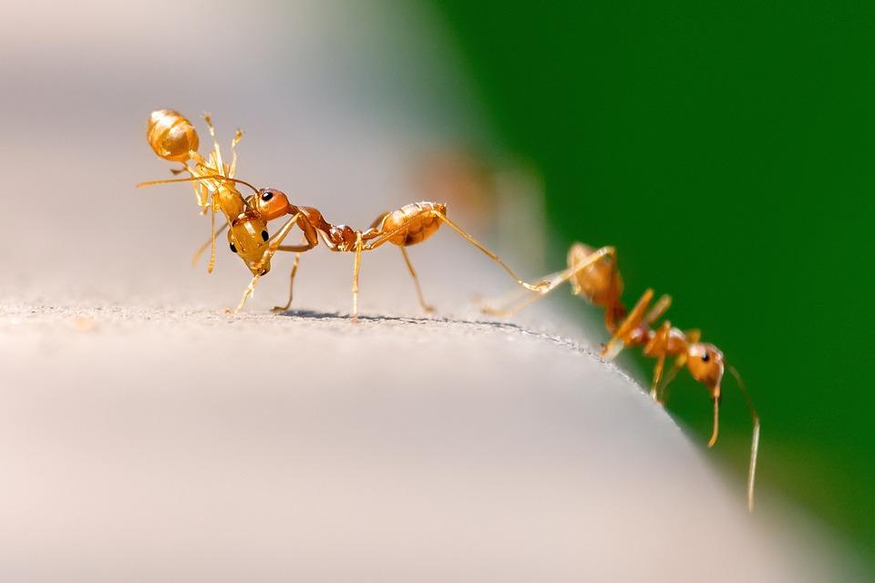 prodotti per disinfestazione formiche