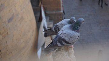 Rete anti piccioni, un sistema efficace per tenerli lontano