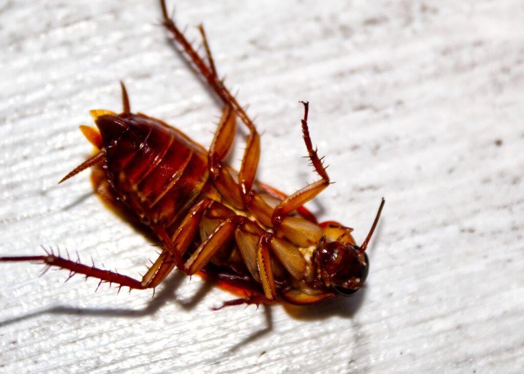 Prodotti per eliminare scarafaggi