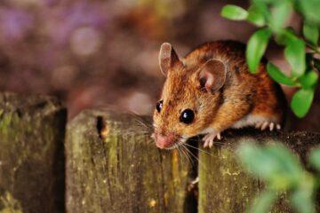 Prodotti per topi: come muoversi in autonomia
