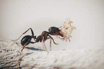 Come risolvere il problema dell'infestazione formiche