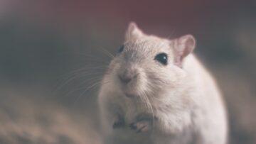 Presenza di topi come combatterli