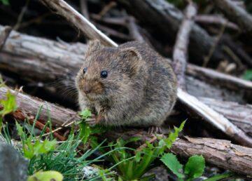 Dove si nascondono i topi in casa